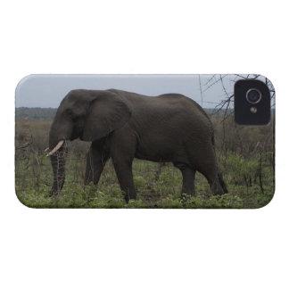 African Elephant, Wildlife, Wild Animal iPhone 4 Covers