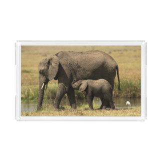 African Elephants at water pool Acrylic Tray