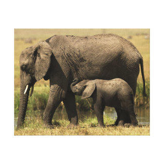 African Elephants at water pool Canvas Print