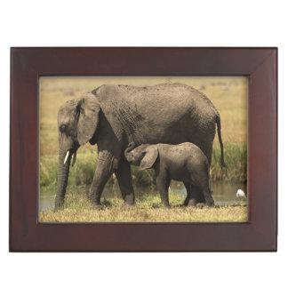 African Elephants at water pool Keepsake Box