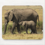 African Elephants at water pool Mouse Pad