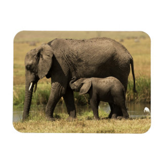 African Elephants at water pool Rectangular Photo Magnet