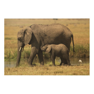 African Elephants at water pool Wood Wall Art