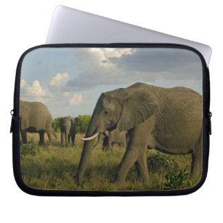 African Elephants grazing, Loxodonta africana, Laptop Sleeve