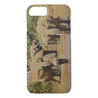 African Elephants, Loxodonta Africana, Samburu iPhone 8/7 Case