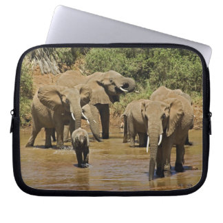 African Elephants, Loxodonta Africana, Samburu Laptop Sleeve