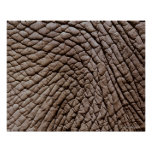 African elephant's (Loxodonta africana) skin Poster