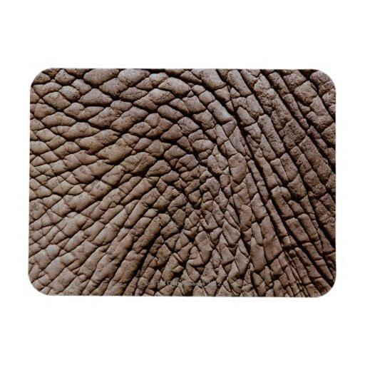 African elephant's (Loxodonta africana) skin Flexible Magnets