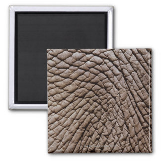 African elephant's (Loxodonta africana) skin Square Magnet