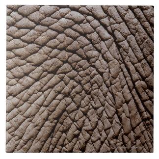 African elephant's (Loxodonta africana) skin Tile