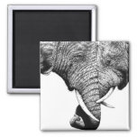 African Elephants Magnet