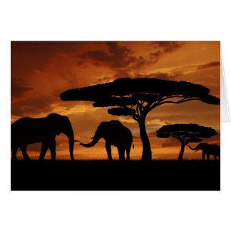 African elephants silhouettes in sunset card