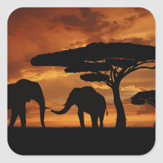 African elephants silhouettes in sunset square sticker