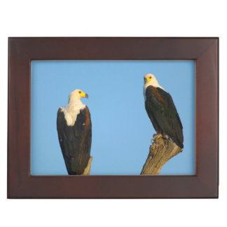 African Fish Eagle (Haliaeetus Vocifer) Keepsake Box