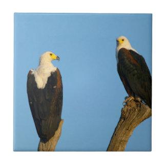 African Fish Eagle (Haliaeetus Vocifer) Tile