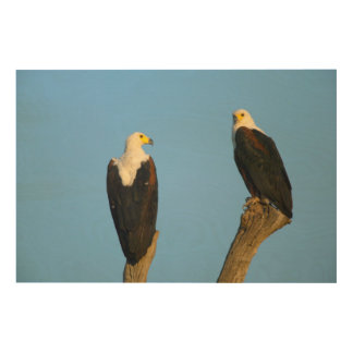 African Fish Eagle (Haliaeetus Vocifer) Wood Wall Art