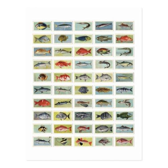 African Fish Postcard