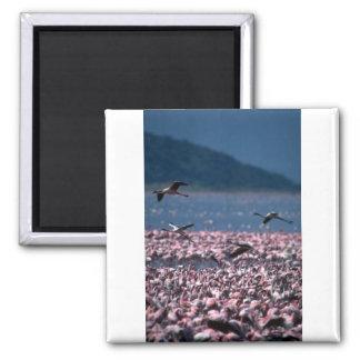 African Flamingos Refrigerator Magnets