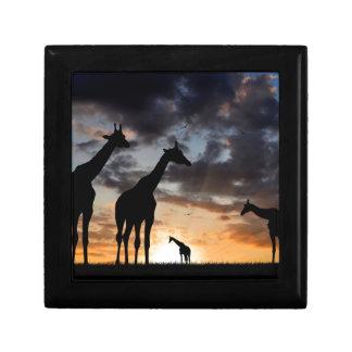 African giraffe gift box