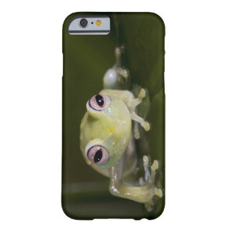 African Glass Frog, Hyperolius viridiflavus, Barely There iPhone 6 Case