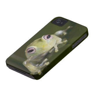 African Glass Frog, Hyperolius viridiflavus, iPhone 4 Cover