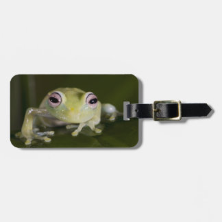 African Glass Frog, Hyperolius viridiflavus, Luggage Tag
