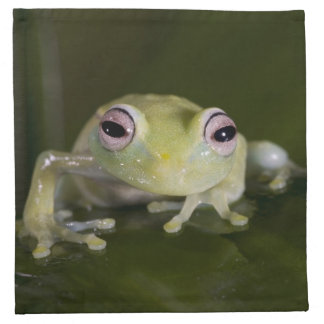 African Glass Frog, Hyperolius viridiflavus, Napkin