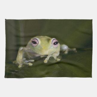 African Glass Frog, Hyperolius viridiflavus, Tea Towel
