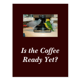 African Grey & Caique Coffee Friends Postcard