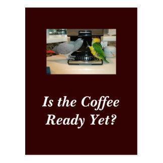 African Grey & Caique Coffee Friends Postcard