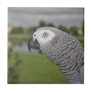 African Grey Lakeside Small Square Tile