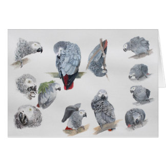 African Grey Parrot. Exclusive designed by Griff Greeting Card