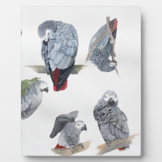 African Grey Parrot. Exclusive designed by Griff Plaque