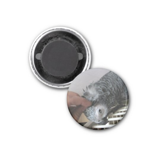African Grey Parrot getting a head scratched 3 Cm Round Magnet