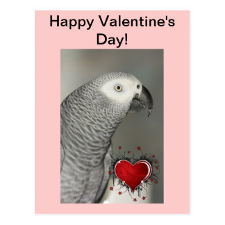 African Grey Parrot Happy Valentine's Day Postcard