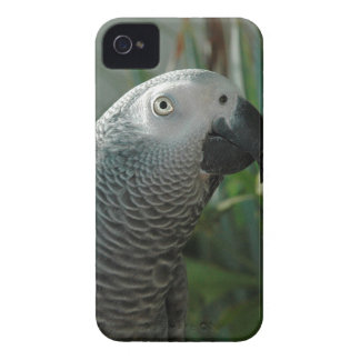 African Grey Parrot iPhone 4 Cases