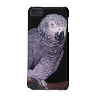 African Grey Parrot iPod Touch Case