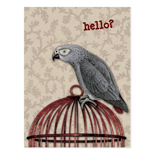 African Grey Parrot on Red Birdcage Post Cards