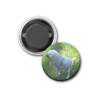 African Grey Parrot Outside Refrigerator Magnets