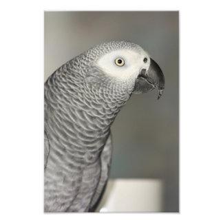 African Grey Parrot Photo Art
