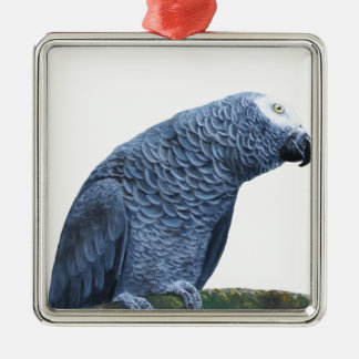 African Grey parrot portrait Silver-Colored Square Decoration