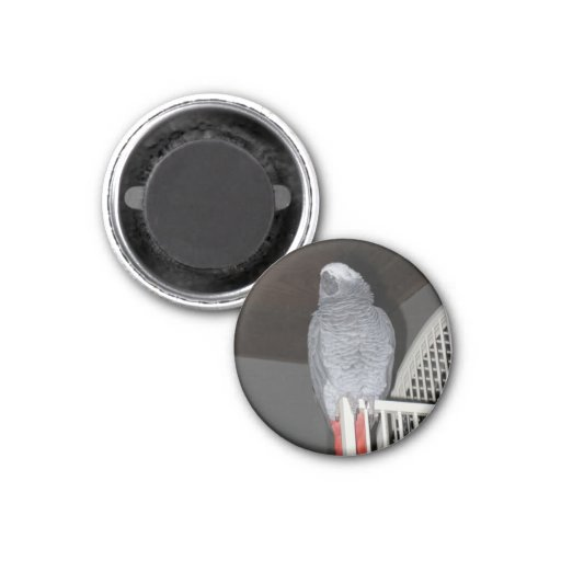 African Grey Parrot Sleeping Magnets