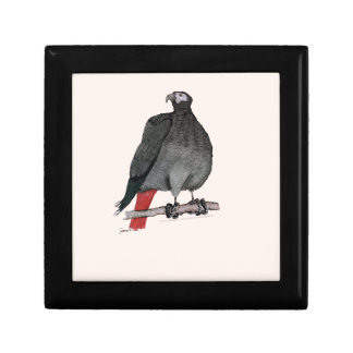 african grey parrot, tony fernandes gift box