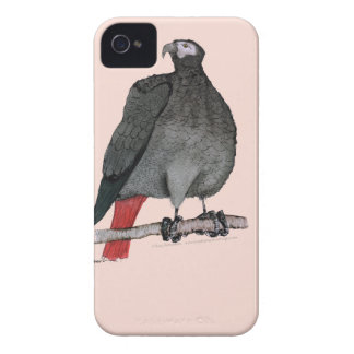african grey parrot, tony fernandes iPhone 4 Case-Mate case