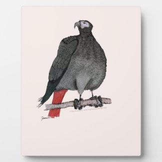 african grey parrot, tony fernandes plaque