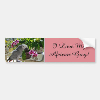 African Grey Parrot with Orchids Bumper Sticker