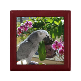 African Grey Parrot with Orchids Gift Box