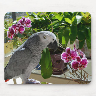 African Grey Parrot with Orchids Mouse Mat