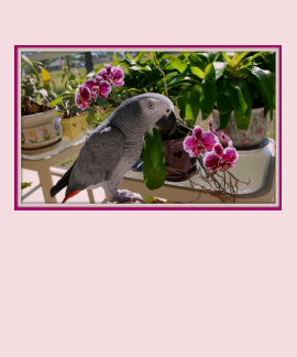 African Grey Parrot with Orchids Tee Shirts