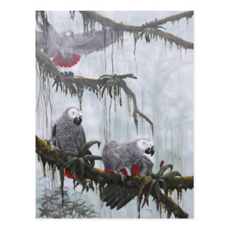African Grey Parrots flying free Postcard